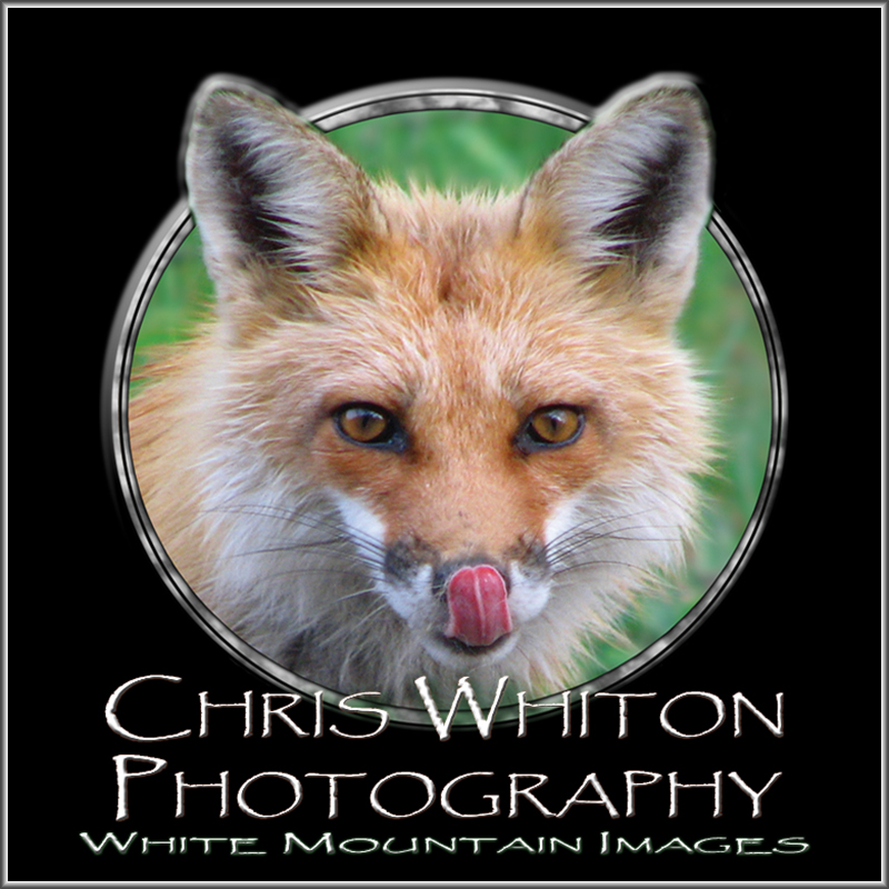 Chris Whiton